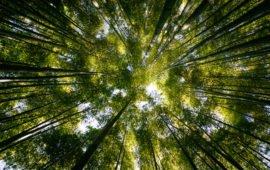 IBAMA regulamenta conversão de multas ambientais