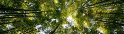 Meio Ambiente: IBAMA e ICMBio atualizam diretrizes e critérios relativos à fase de conciliação ambiental nos processos sancionatórios