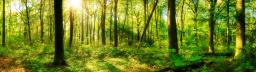 Ministério do Meio Ambiente institui a modalidade Floresta+ Bioeconomia no Programa Nacional de Pagamentos por Serviços Ambientais